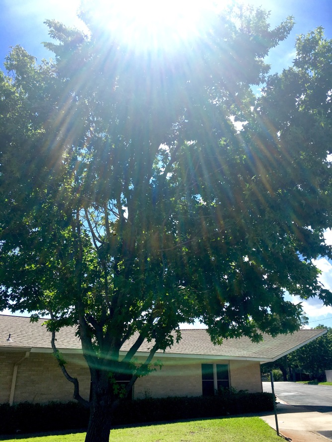 Tree - Sunrays